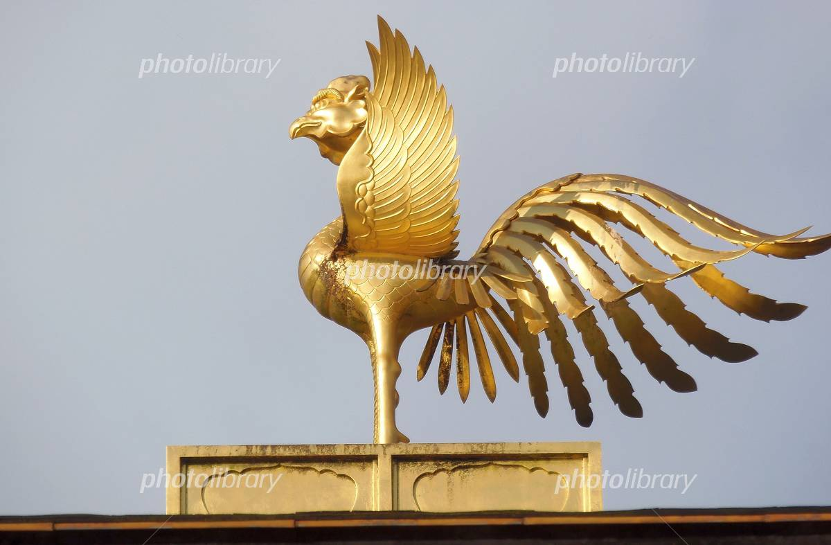 金閣寺の鳳凰 写真素材 4369558 フォトライブラリー