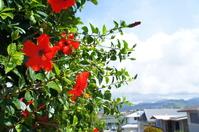 Hawaii Hibiscus Stock photo [4368934] flower
