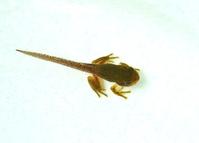 Larvae of frog Stock photo [4452116] Larvae