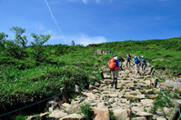 Nagano Prefecture Hakuba Happoone nature study road trekking mountains in summer Stock photo [4540600] Happo