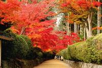 Autumn leaves of Koyasan Stock photo [4542554] Wakayama