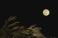 Moon-viewing image Japanese pampas grass and the moon Stock photo [4612079] Month