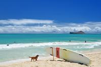 オアフ島の夏