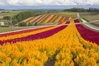 The hills of Biei Shikisai Stock photo [4669578] The