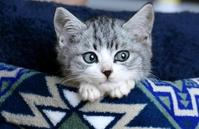kitten Stock photo [4739764] kitten