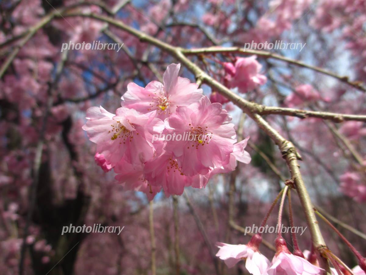 https://www.photolibrary.jp/mhd3/img507/450-20170110222824321721.jpg