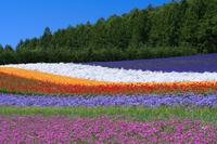 Flower garden Stock photo [158307] Early