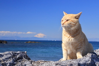 Coast of cat and Mount Fuji Stock photo [4924911] Cat