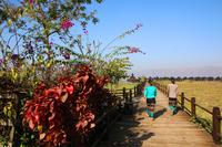 ミャンマーのインレー湖畔