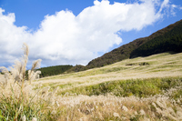Hakone Sengokuhara Japanese pampas grass of Stock photo [4932191] Sengokuhara