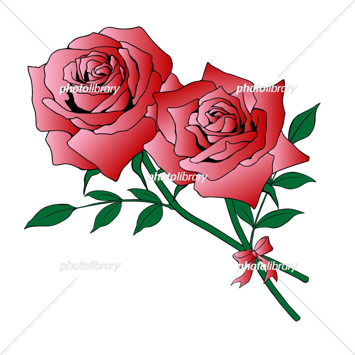 二輪の赤い薔薇 イラスト素材 5026633 フォトライブラリー