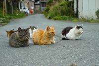 Cat Tashirojima Stock photo [5026170] Miyagi