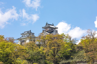 Echizen Ono Castle Stock photo [5026327] Castle