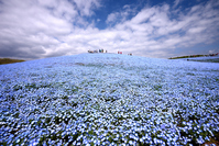 Hill of Hitachi Seaside Park Miharu Stock photo [5028690] Hitachi