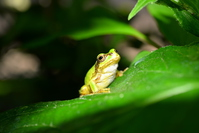 Tree frog on the leaf Stock photo [5030941] Frog