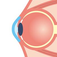 イラスト Eyeball(5115170)
