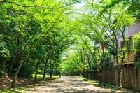 写真 Residential area wrapped in green(5116038)