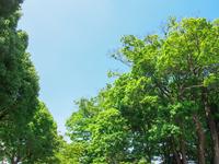 写真 Fresh green(5116152)