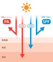 イラスト UV PA SPF(5119079)