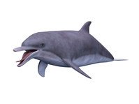 イラスト Dolphin(5202572)