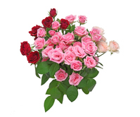 A bouquet of roses  Photo