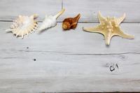Starfish and shell  Photo