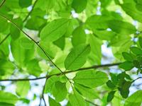 写真 Shade of tree(5204267)