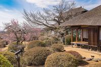 写真 Watermelte and plum forest of Mito Kairakuen(5204534)