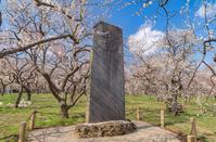 写真 Buddhist forest of Mito Kairakuen and a monument of Diani(5204555)