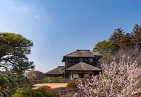 写真 Watermelte and plum forest of Mito Kairakuen(5204564)