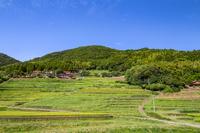 写真 Nakakedaki Inside Rice terrace(5205163)