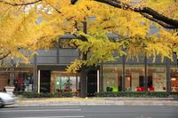 Late autumn of Mido Stock photo [320547] Town