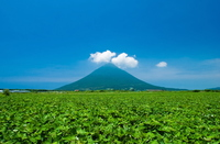Sweet potato fields and Kaimondake Stock photo [323185] Kagoshima