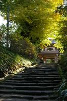Jōchi-ji ginkgo Stock photo [323293] Ginkgo