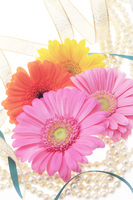 Gerbera Stock photo [363286] Gerbera