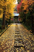 Autumn Enkakuji Stock photo [369067] Scattered
