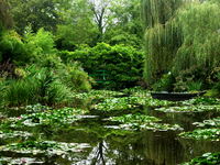 Giverny Monet's water garden Stock photo [370989] France