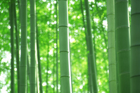 Bamboo forest Stock photo [375329] Bamboo