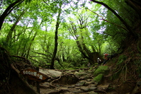 Yakushima - Mononoke Forest Princess Stock photo [381465] Princess