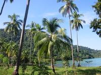 Thailand Kut Island Stock photo [439838] Thailand