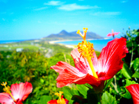 Hibiscus Stock photo [491860] South