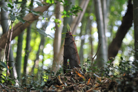 Bamboo shoots Stock photo [495744] Bamboo
