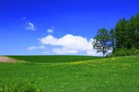 Blue sky and dandelion Stock photo [530550] Dandelion