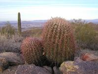 Phoenix, Arizona cactus Stock photo [531941] Arizona