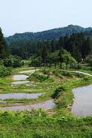 Matsunoyama Nitta of rice terraces Stock photo [571424] Tokamachi