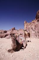 Camel of Petra Stock photo [577452] Jordan