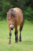 Kiso horses Stock photo [579579] Village