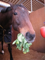 Horse in your diet Stock photo [579914] Horse