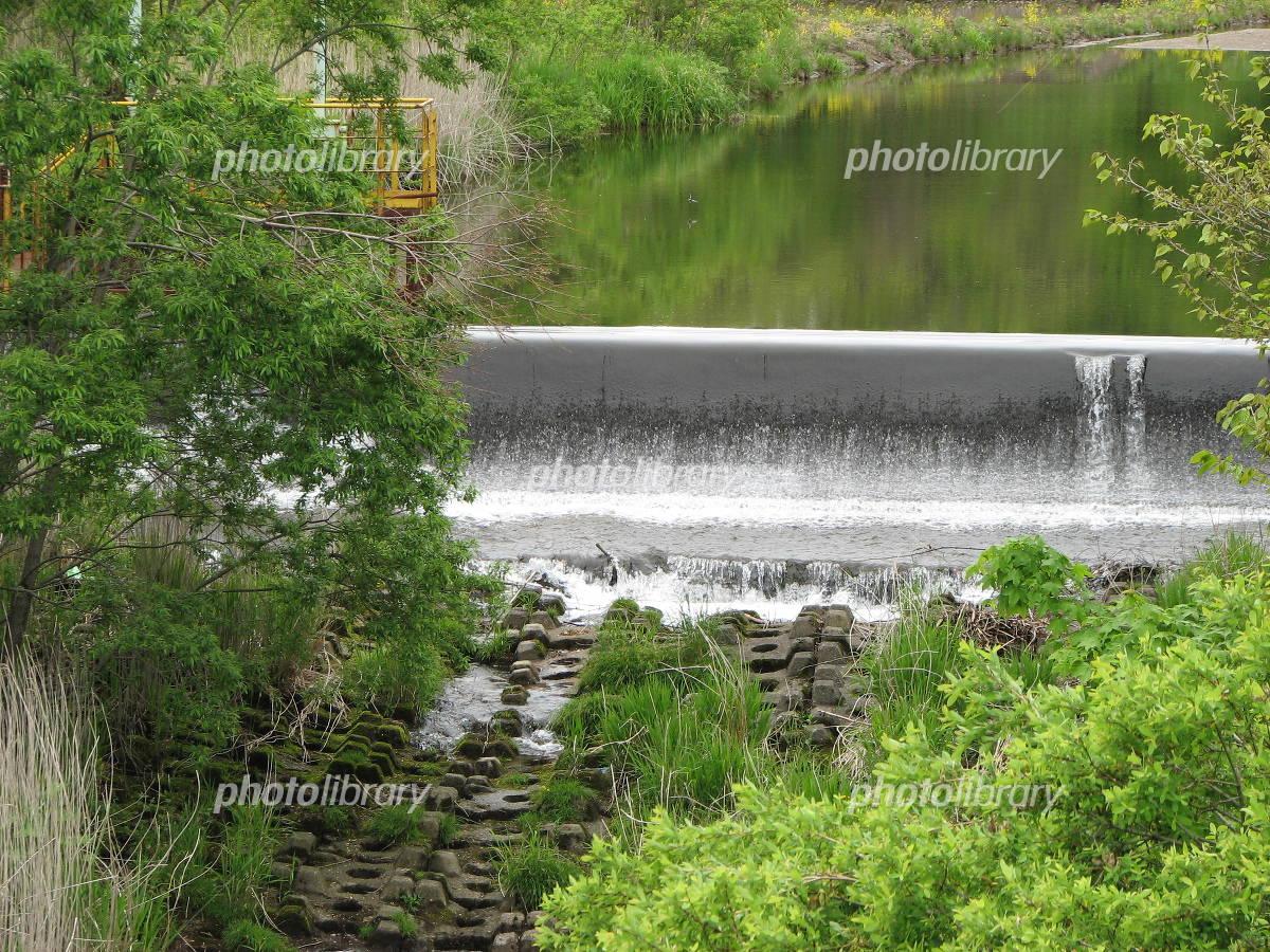 新緑の幌別来馬川の写真