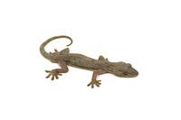 Gecko Stock photo [653228] Lizards